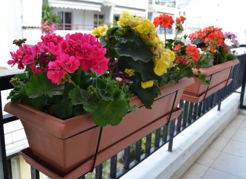 Фото цветов на балкон